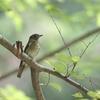 森の幼鳥さんたち