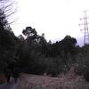 豊田の球根でミウラさんを見直した話