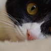 今日の黒猫モモ&白黒猫ナナの動画ー923