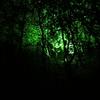 Power Plant:光で飾られた夜の公園