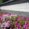 白壁に映える新緑とツツジ『東京小石川後楽園』