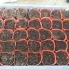 5月8日家の家庭菜園「落花生の芽が出ない???」