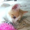 愛猫に遊び相手を連れてきてあげたい。