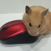 種類が豊富で選べない!マウスについて調べてみた