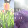 Spring with Nikon Df