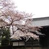 東京国立博物館でお花見