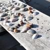 夏の日の贈りもの。浜辺の貝殻は海が奏でるメロディー。