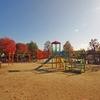 公園に秋が来た!第三弾(最終)(8)