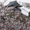 犬山城お花見ツアー(前編)