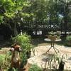 子供と楽しめるフレンチのお店『ガーデングリルMori(モリ)』