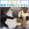 子猫3兄弟初めてのねこじゃらし!【我が家に来て3日目】