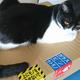 今日の黒猫モモ&白黒猫ナナの動画ー1026
