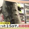 明大通りの街路樹撤去の話