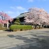 まだまだ桜☆