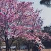 散歩: 西新宿 → 神谷町