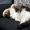 O次郎 猫をだめにする椅子