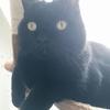 世界一かわいい黒猫
