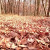 さんとめの桜の木の伐採を見学してきました。