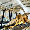 【足寄動物化石博物館】で化石体験をしてきました