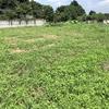 なんだか毎週除草しているような気がする、2020年梅雨末期