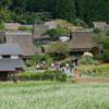 美山川のアユ      今年も全国味比べで準グランプリでした!