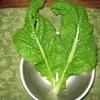 【家庭菜園】かつお菜収穫&飲みに行ってきました。