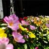 横浜元町の西の橋のお花。