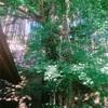 この〜木 なんの木 きになるきになる