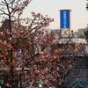 Snapshot  ~『桜 2021』 #1