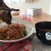 焼きそば食べる猫