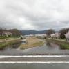半木(なからぎ)の道の桜