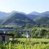 葡萄の丘から上京