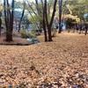 成田山新勝寺で紅葉狩り(長女1歳1ヶ月)