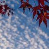 軽井沢の紅葉:アンバランスなビジュアルウエイト