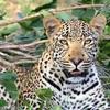 【妄想旅の計画③】スリランカでヒョウ、クマ、ゾウを見よう!