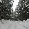 ◆'19/02/11     二ノ滝の氷柱を観に①