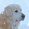 ペットのいる家庭の暖房器具を選ぶポイント