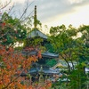 紅葉映える三重塔 水間寺 水間鉄道 水間観音寺駅から歩き旅