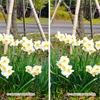 花壇で3Dステレオグラム