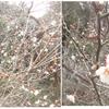 庭木の剪定、徒長枝切り