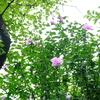 景色は緑ばかり その中に咲く花 そこから思うこと
