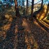 わんこの散歩 裏山の山の神に新年のご挨拶