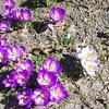 えぃじーちゃんのぶらり旅ブログ~コロナで足止め2020年4月北海道石狩・たまに札幌編その1