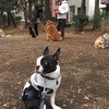 笹谷先生#20集団ドッグトレー二ング