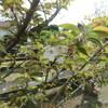 監物台植物園の桜と他の花々