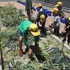 やまびこ:タマネギの収穫