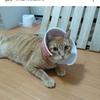 【猫の皮膚炎】モカの皮膚炎発症から現在に至るまでと「今週のお題」に初挑戦〜