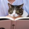 猫飼っている人・猫好きさんには読んでほしい!町田尚子さんのおすすめ猫の絵本3選。
