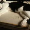 今日の黒猫モモ&白黒猫ナナの動画ー1030