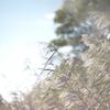 Leica M8 jpeg⑥